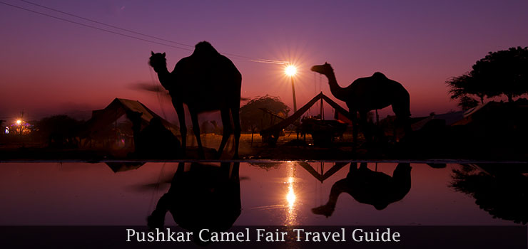 pushkar-camel-fair-travel-guide