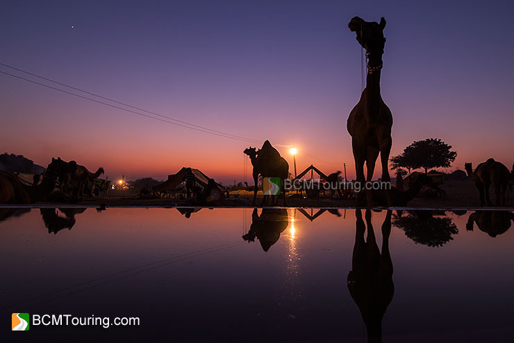 Pushkar Camel Fair Travel Guide