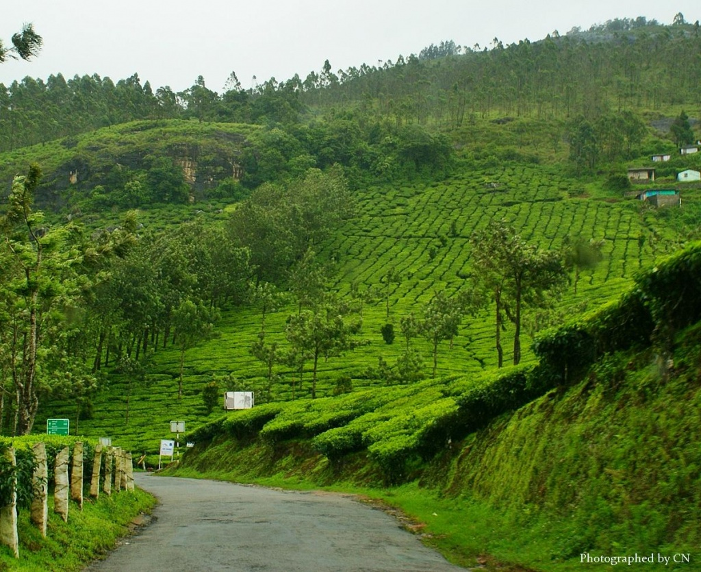 travelogue to munnar This whole travelogue is going to be of 4 segments: • 27 july:  o in munnar, the  first day's stay is ela ecoland jungle resort o the second day's.