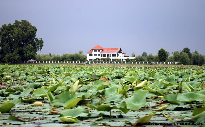 2 Dal Lake.JPG