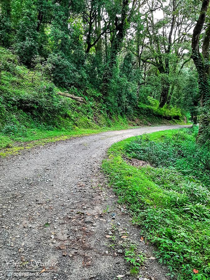 30-trekking-trail-ranikhet.jpg