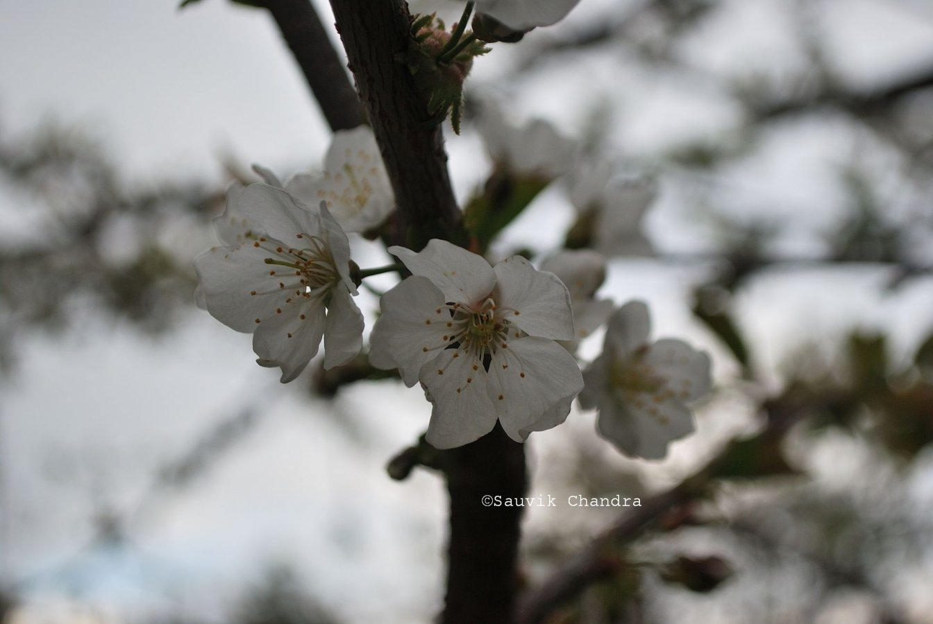 5 Tanijubbar lake_009_March 2018_edited.jpg