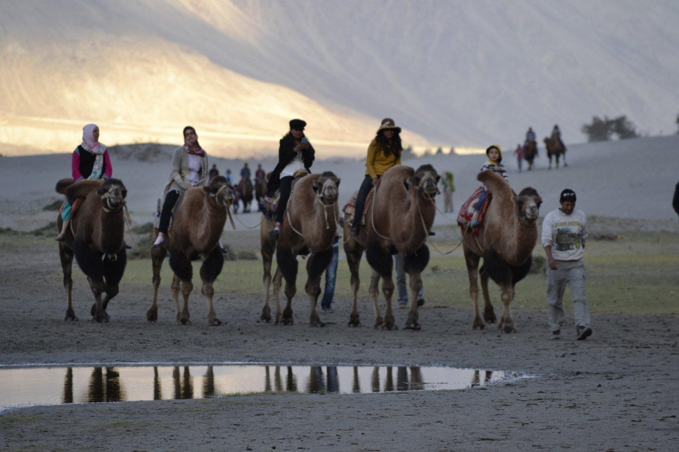 7.8.2 Hunder - Camel ride.JPG