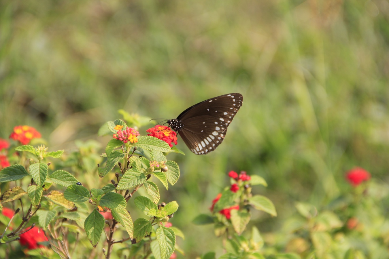India's largest Butterfly Park, Sarthana | India Travel