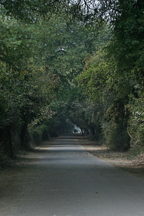 bharatpur 012.jpg