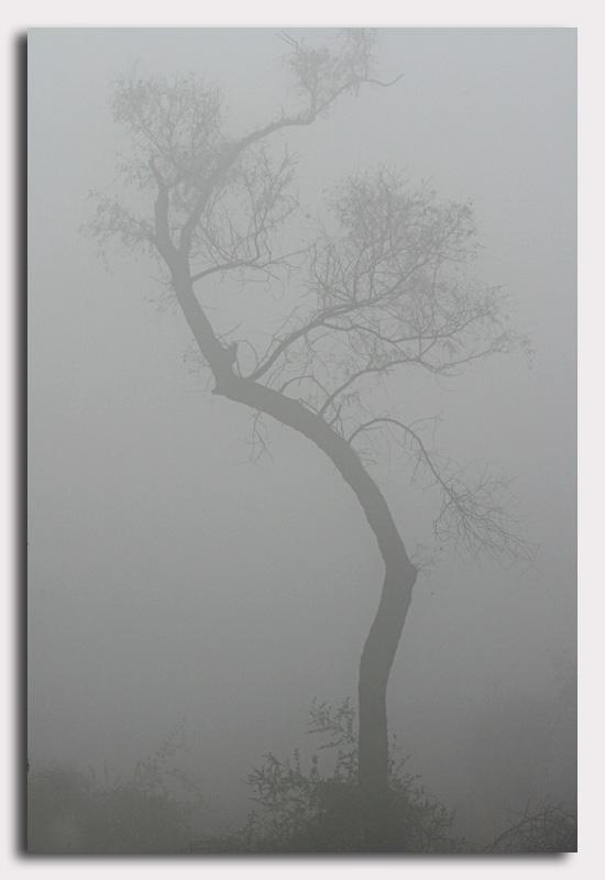 bharatpur 082.jpg