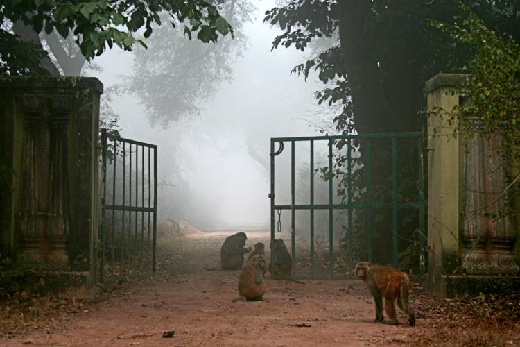 bharatpur 092.jpg