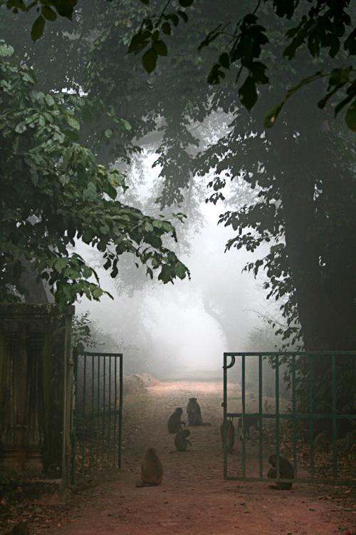 bharatpur 095.jpg