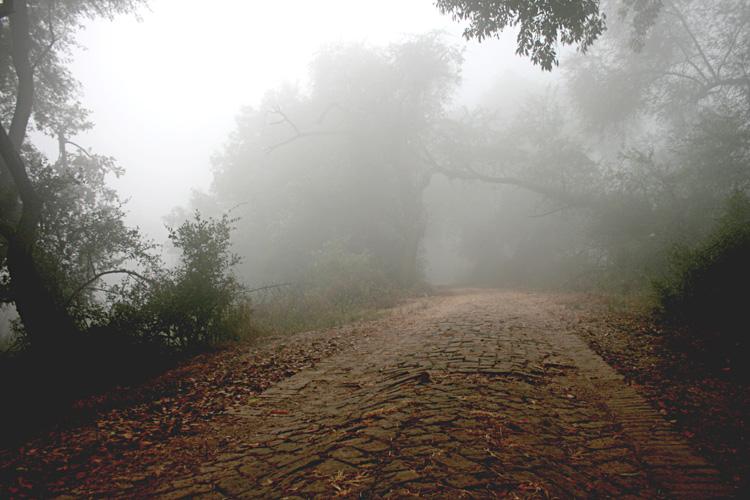 bharatpur 103.jpg