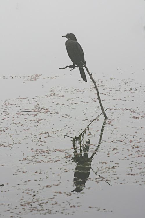 bharatpur 131.jpg