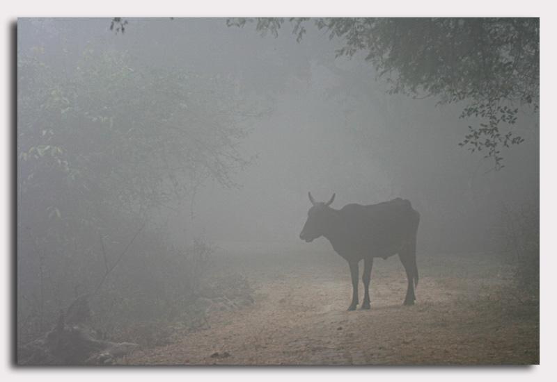 bharatpur 132.jpg