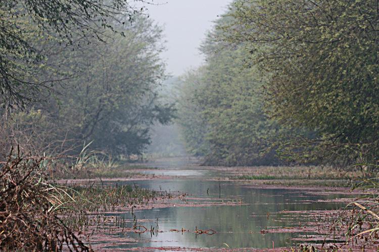 bharatpur 191.jpg