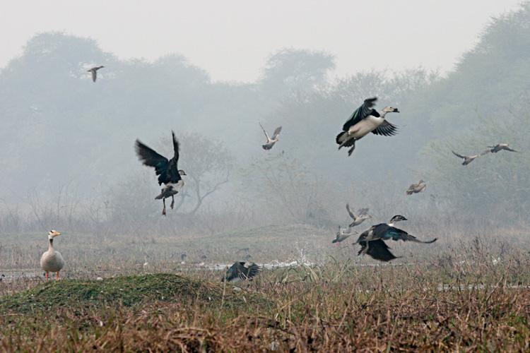 bharatpur 202.jpg