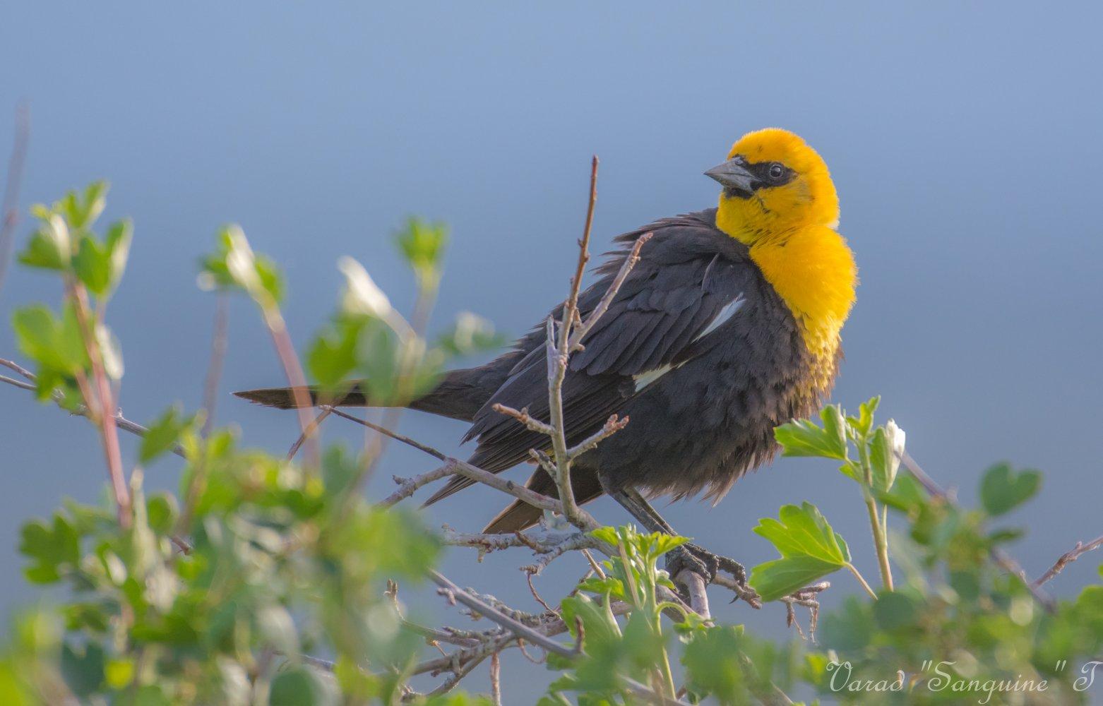 bird8 bridgeport valley.jpg