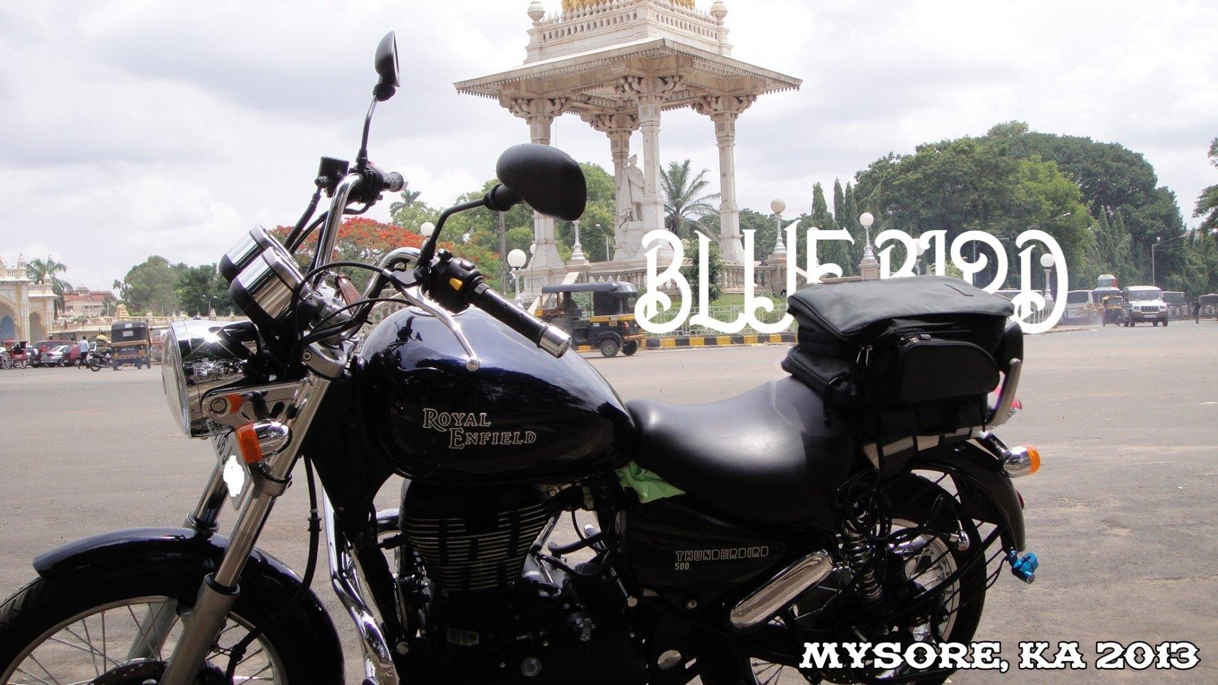 BlueBirdMysore.jpg