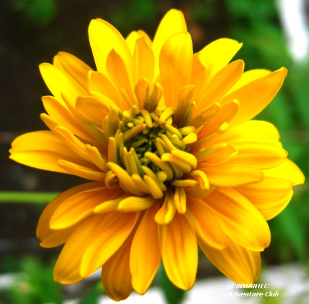 campflower4.JPG