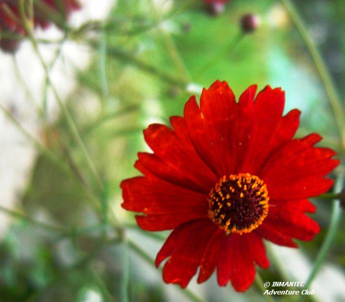 campflower5.JPG