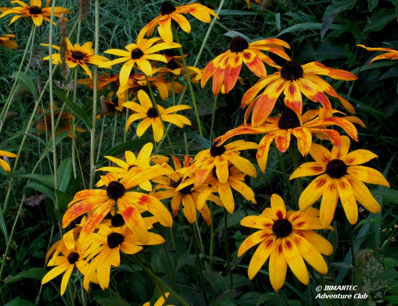 campflower8.JPG