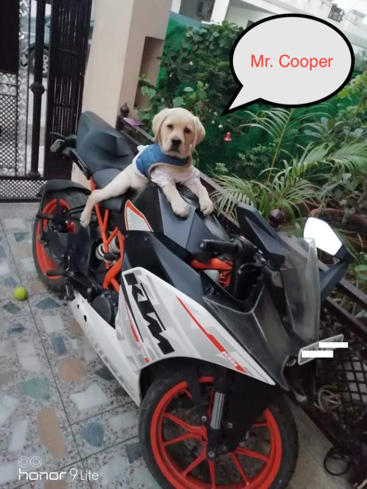 cooperonbike.png