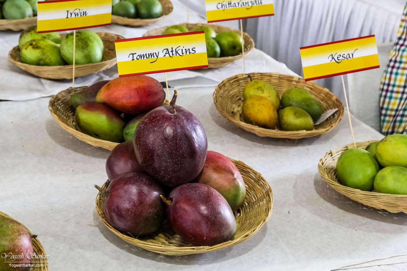 Delhi-Mango-Festival-Market.jpg