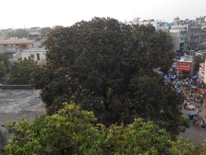 Delhi Photo 027.JPG
