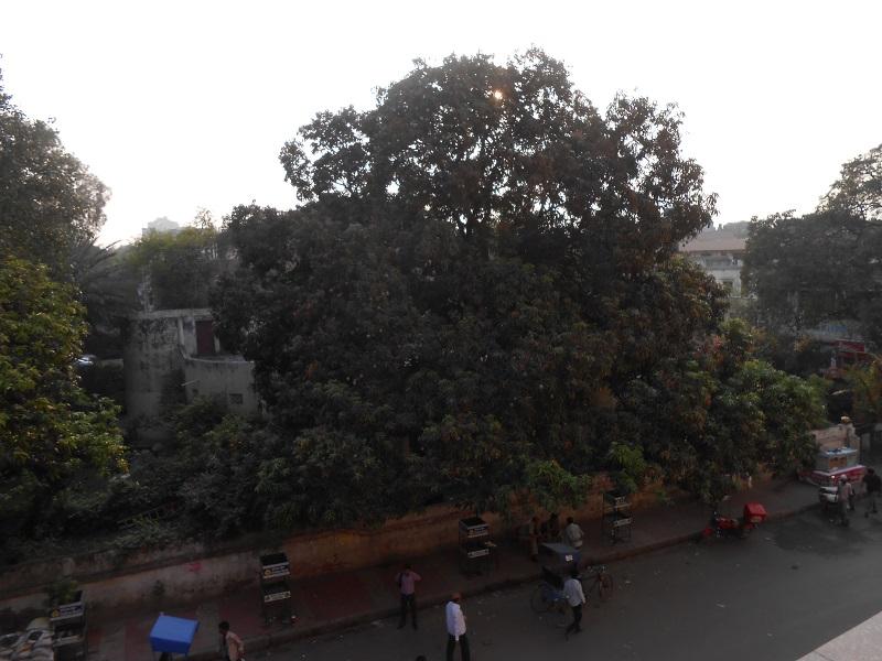 Delhi Photo 028.JPG