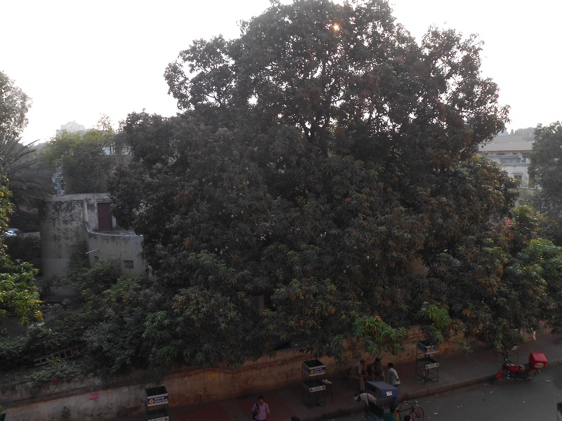Delhi Photo 029.JPG