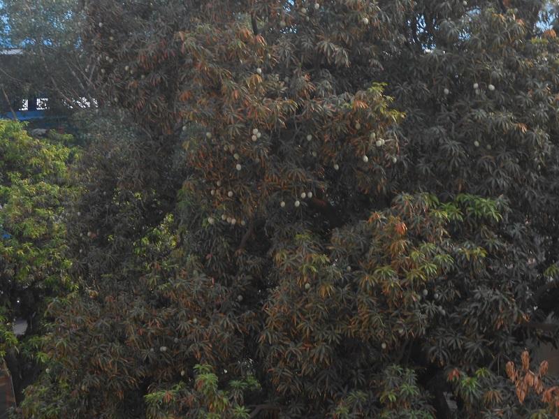 Delhi Photo 033.JPG
