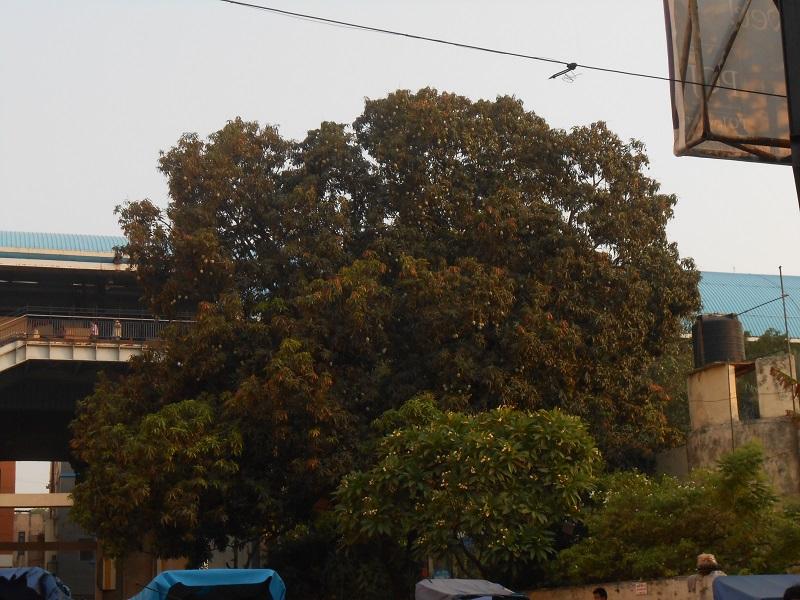 Delhi Photo 034.JPG