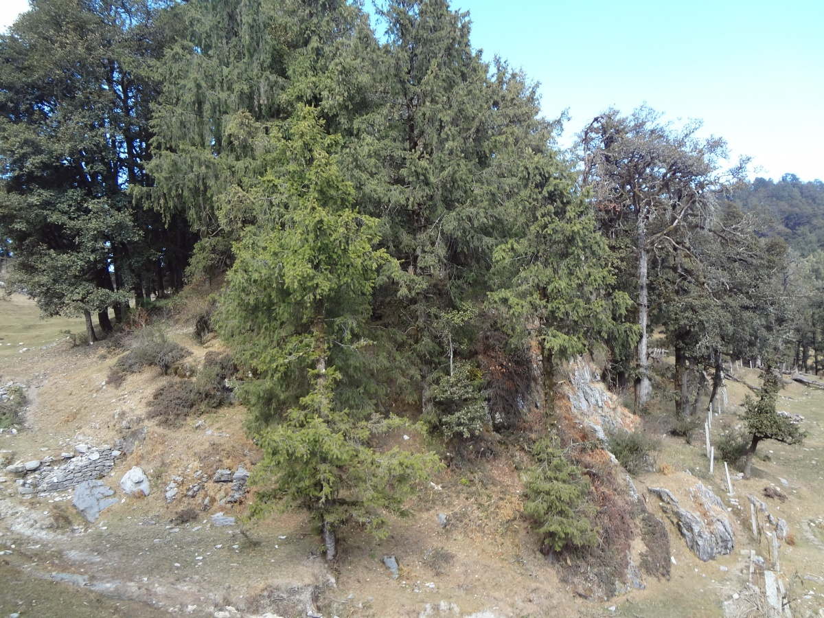 Hotel Dev Conifers Green The Tour Of Garhwal Nov 2012 India Travel Forum Bcmtouring