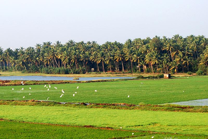 Kerala Beautiful Landscapes of Kerala