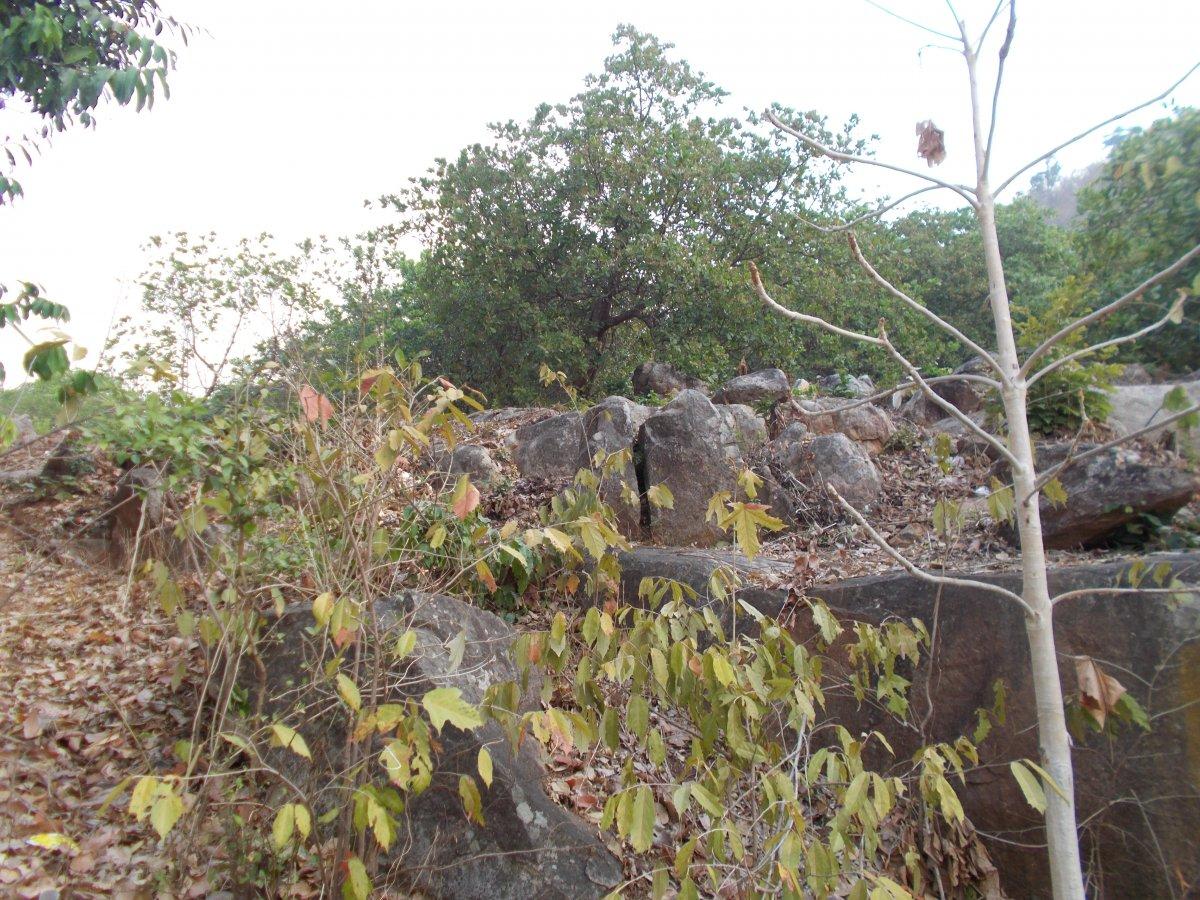 DSCN4695.JPG