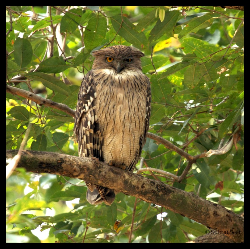 Bandhavgarh a different perspective india travel forum for Do owls eat fish