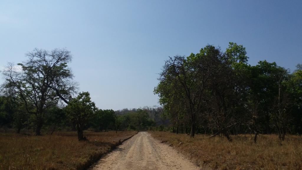 forest bcm.jpg