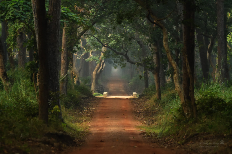 Forest-road_Dudhwa2_ISO5600.jpg