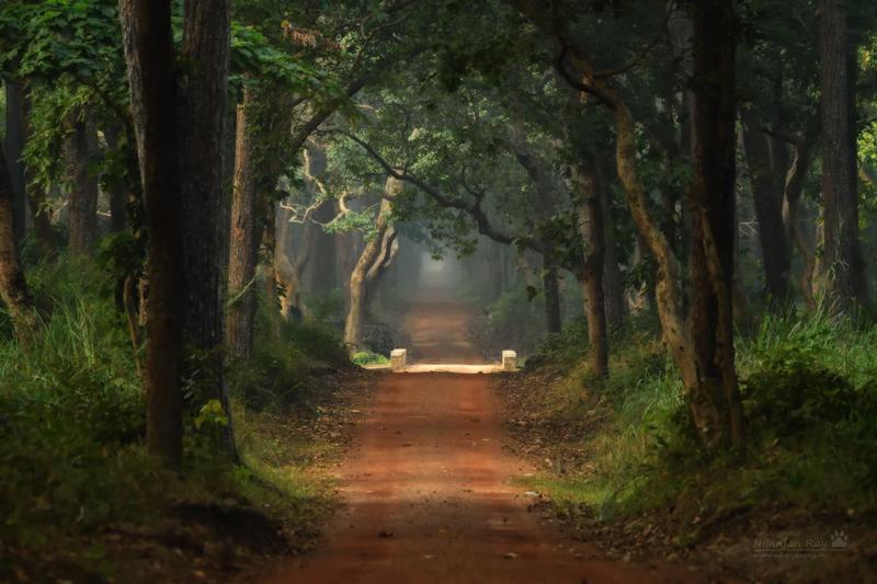 Forest-road_Dudhwa2_ISO5600.jpg
