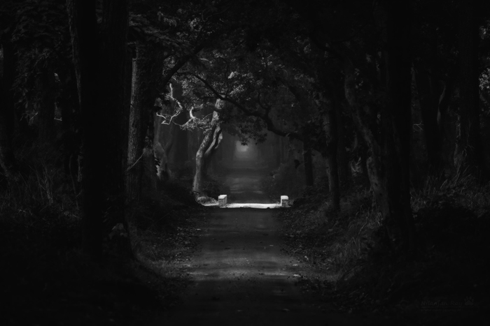 Forest-road_Dudhwabw.jpg