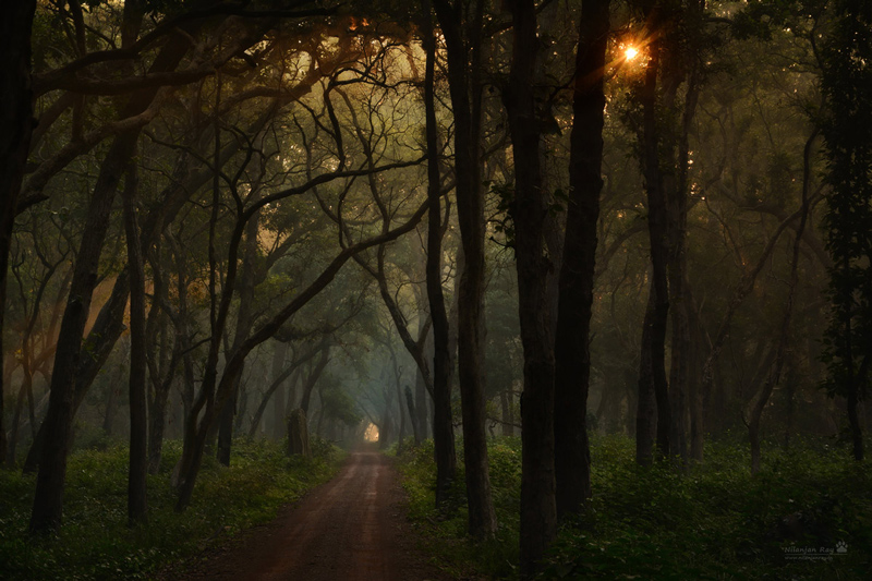 Forest-road_early-morning.jpg