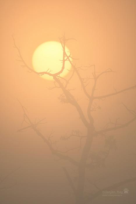 Haunting-sunrise.jpg