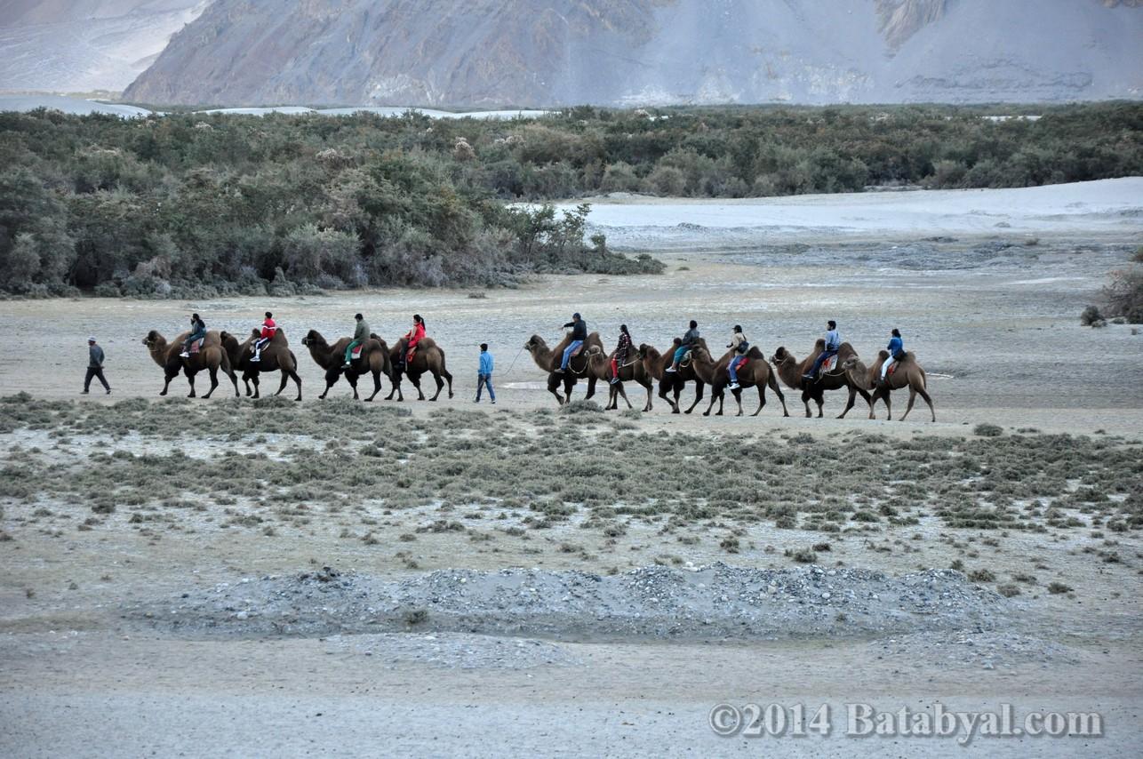 Ladakh_099.jpg
