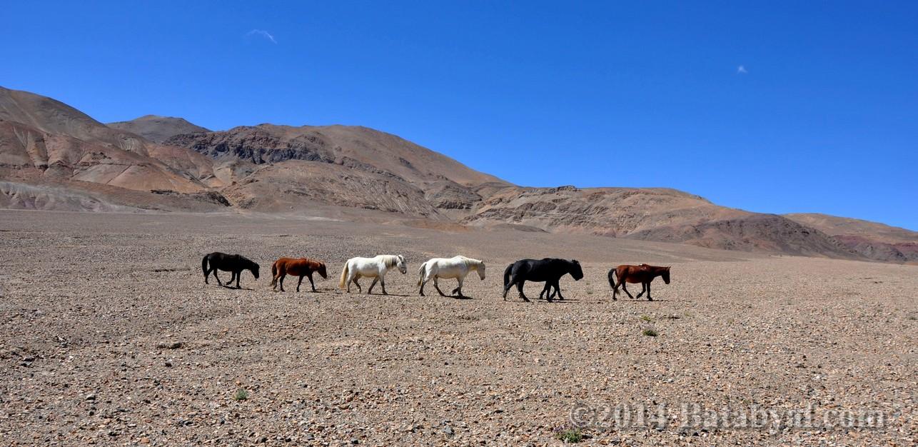 Ladakh_192.jpg