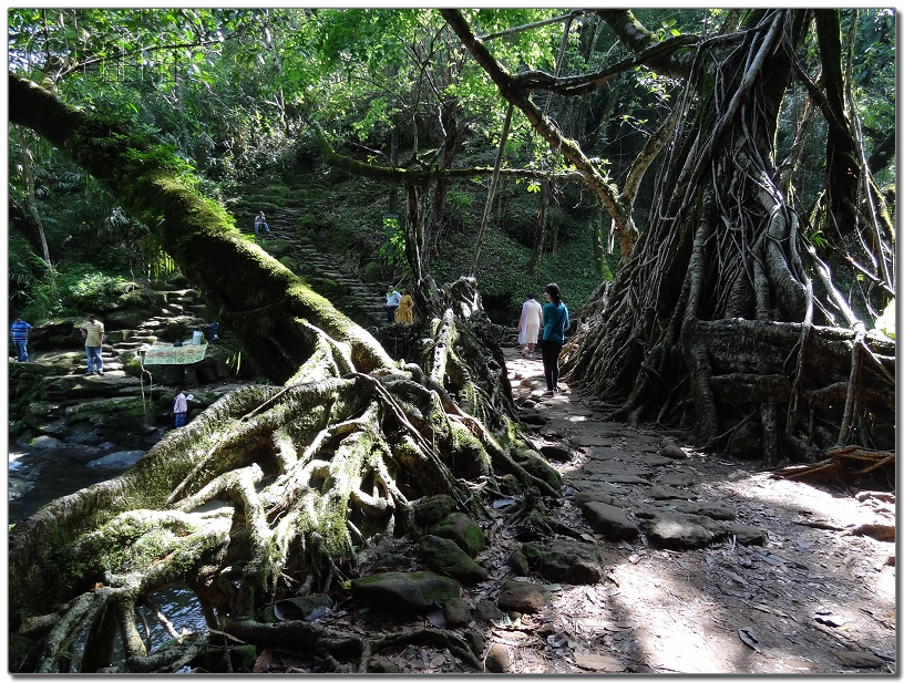 Living Root Bridge-DSC00370.JPG