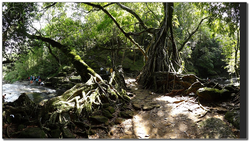 Living Root Bridge-DSC00373.JPG