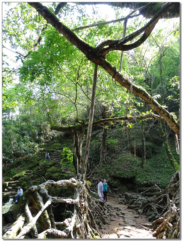 Living Root Bridge-DSC00379.JPG