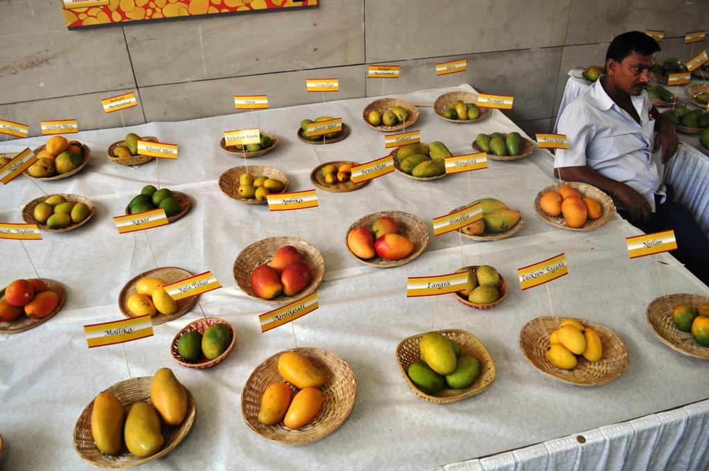 Mango Fest 09.JPG