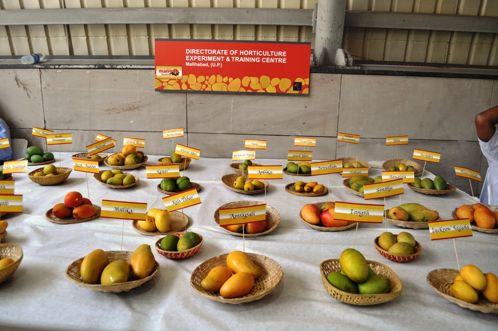 Mango Fest 10.JPG