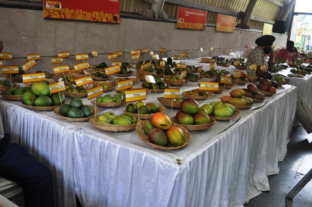 Mango Fest 11.JPG