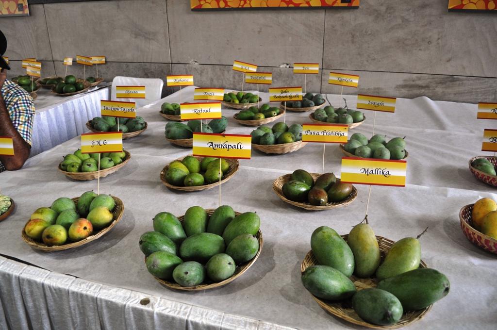 Mango Fest 13.JPG
