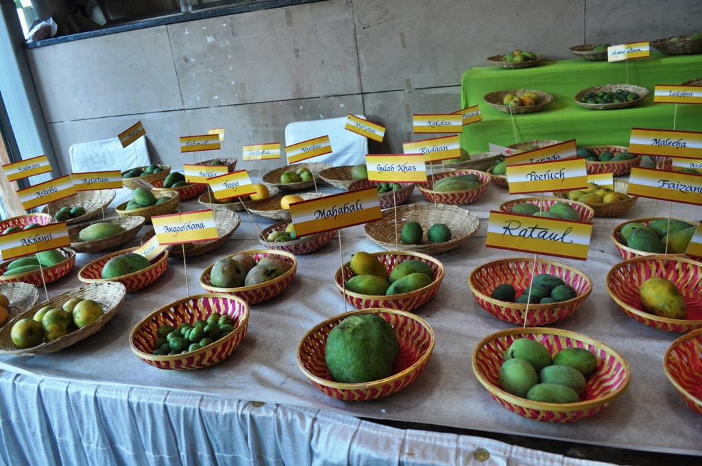Mango Fest 16.JPG