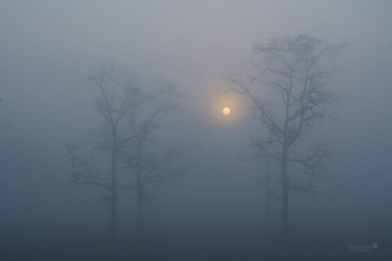 Misty-sunrise_grassland.jpg